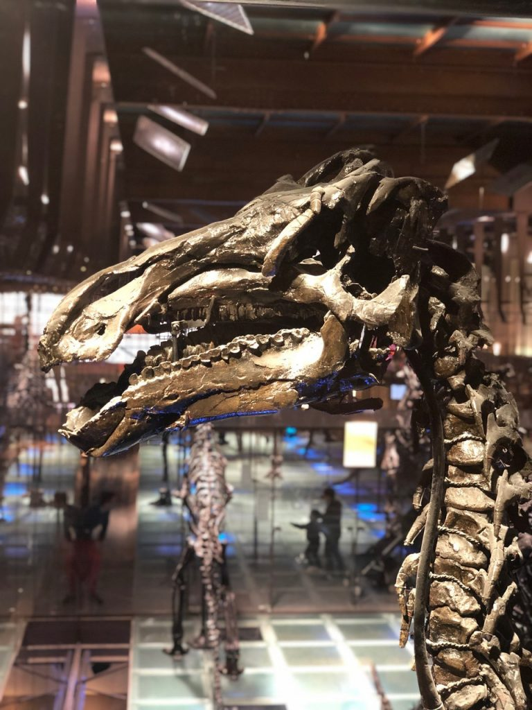 The Bernissart dinosaurs: Iguanodon fossils in Brussels