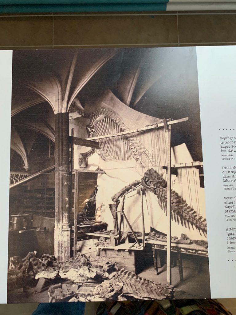 Photo of mounting the Iguanodons