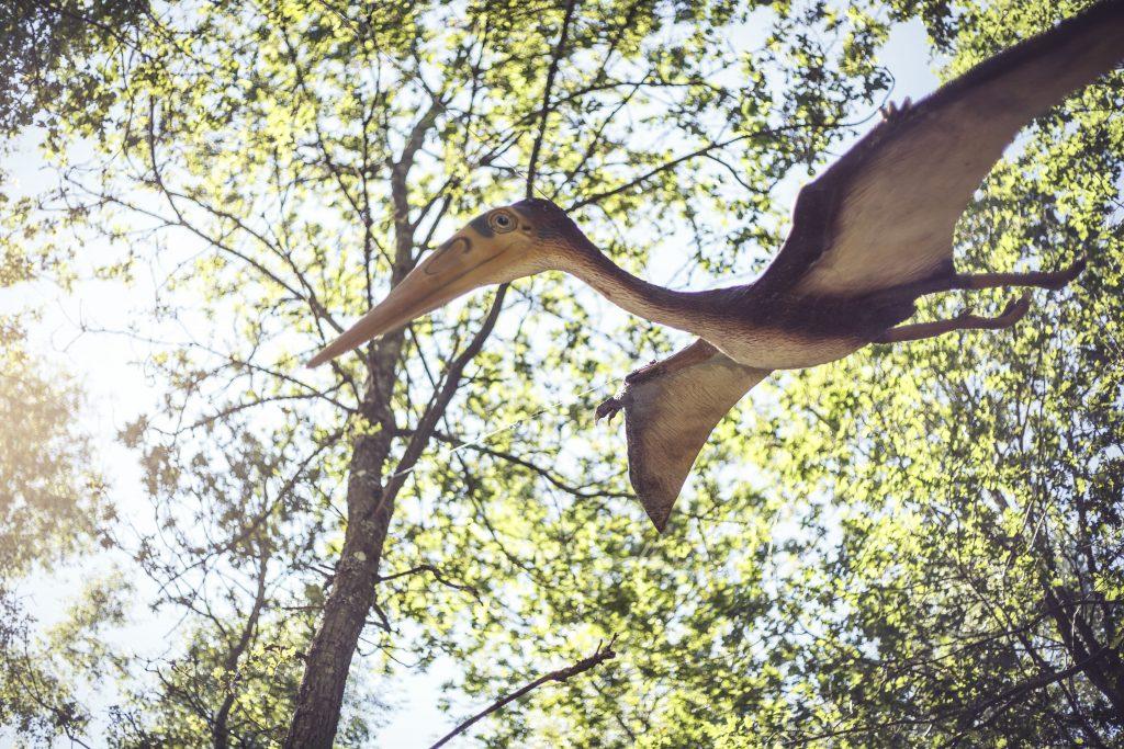 Pteranodon, Dino Museum Altmühltal