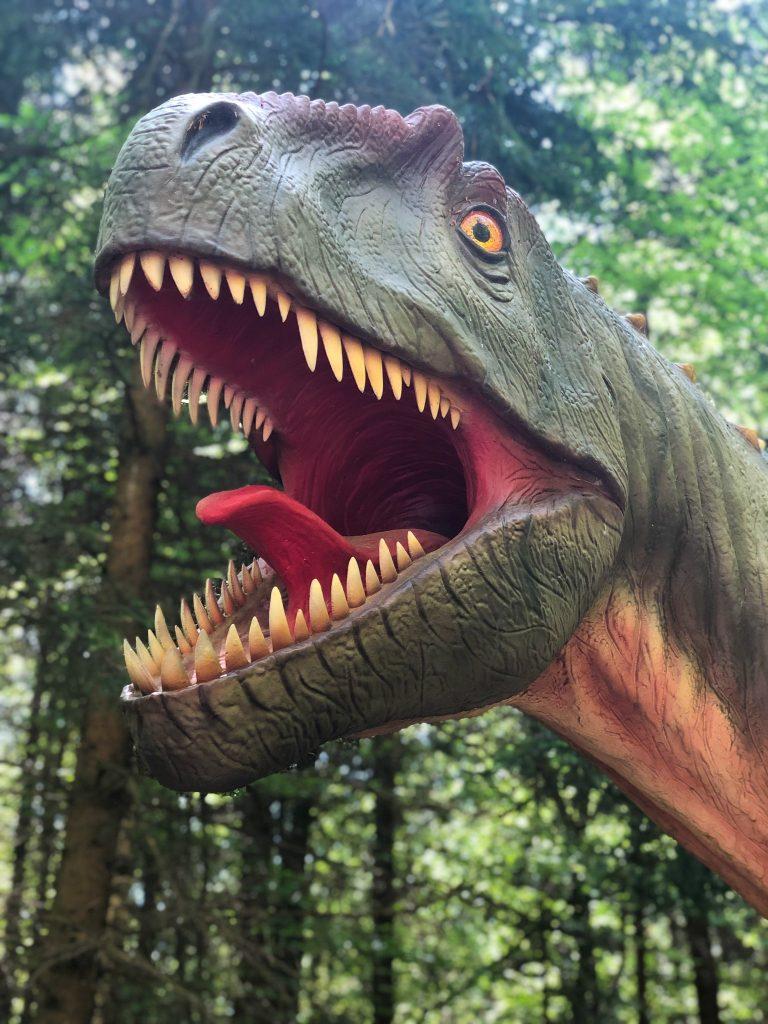 Tyrannosaurus Rex, Dino Museum Altmühltal