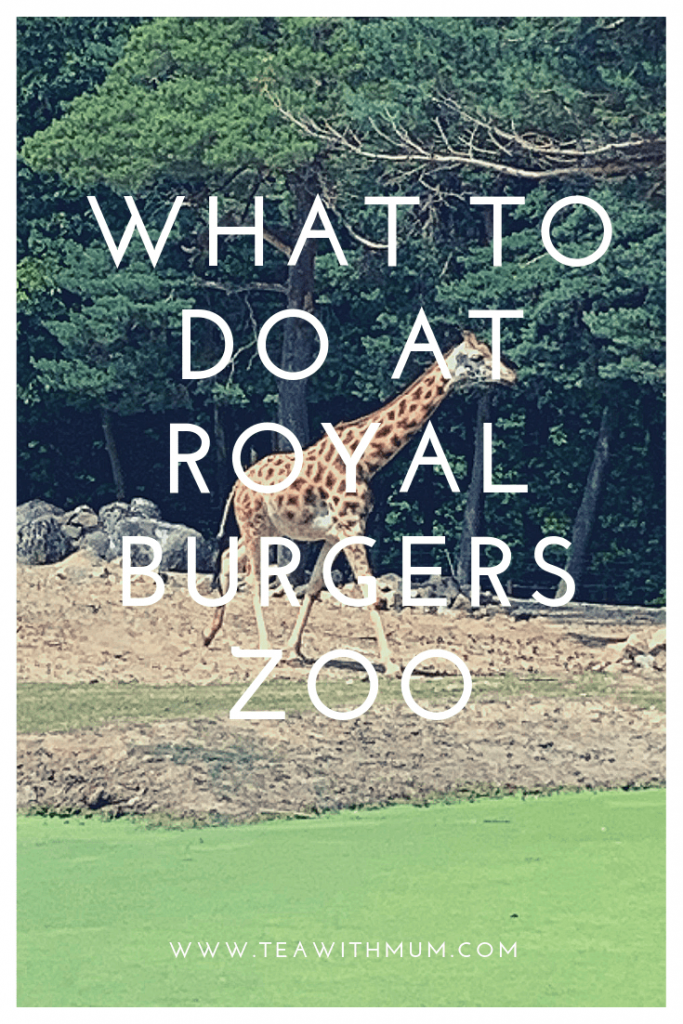 What to do at Royal Burgers Zoo