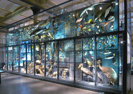 Biodiversity Wall, Museum für Naturkunde Berlin