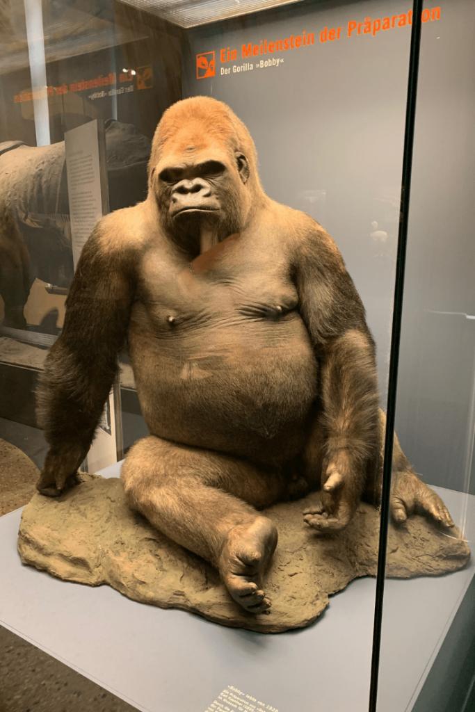 Bobby the gorilla, Berlin