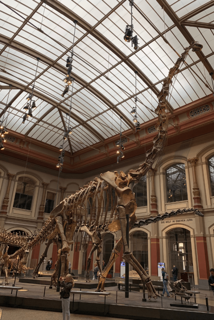Brachiosaurus fossil - Museum für Naturkunde