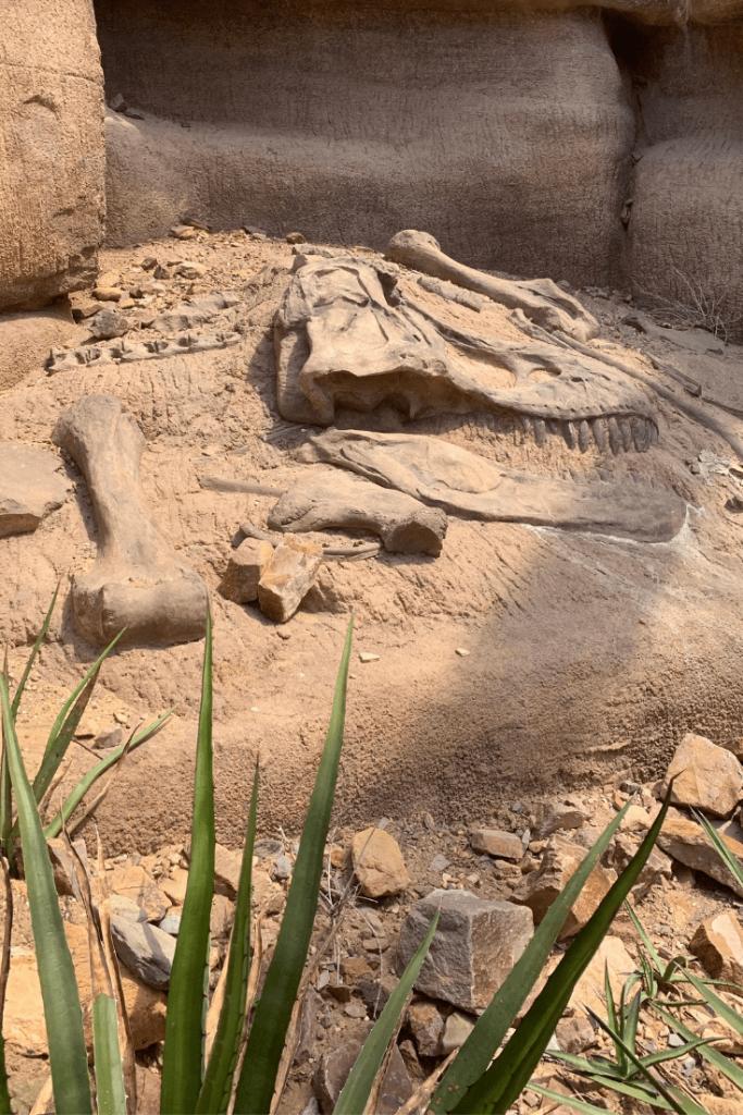 Fossil dig at Royal Burgers Zoo