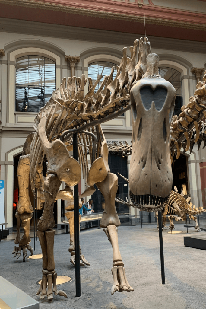 Well hello there: sauropod