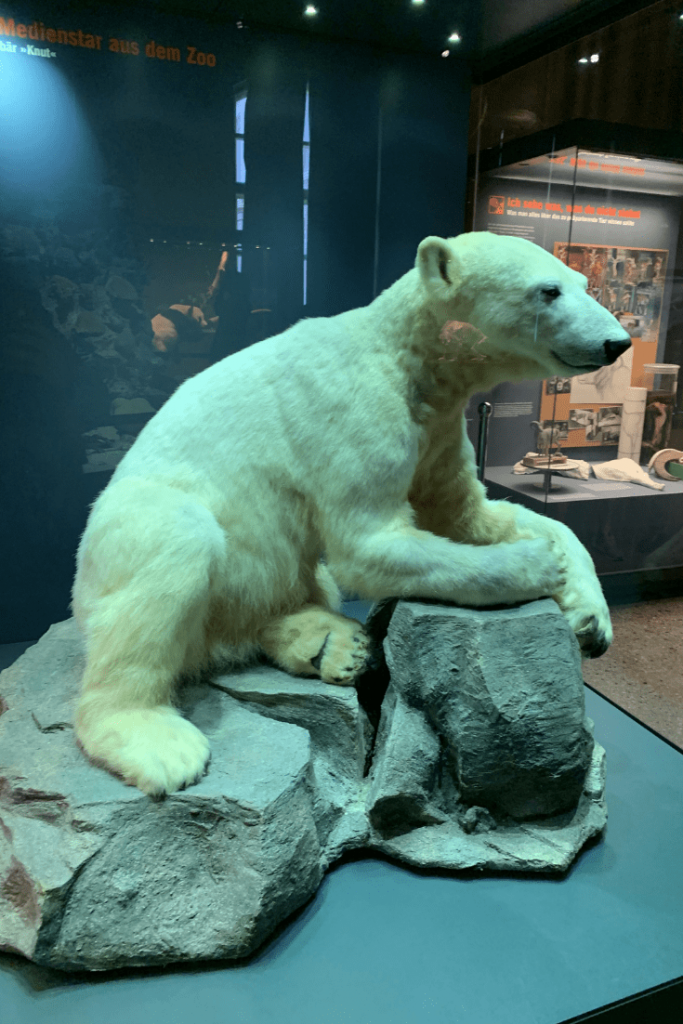 Knut the polar bear, Museum für Naturkunde