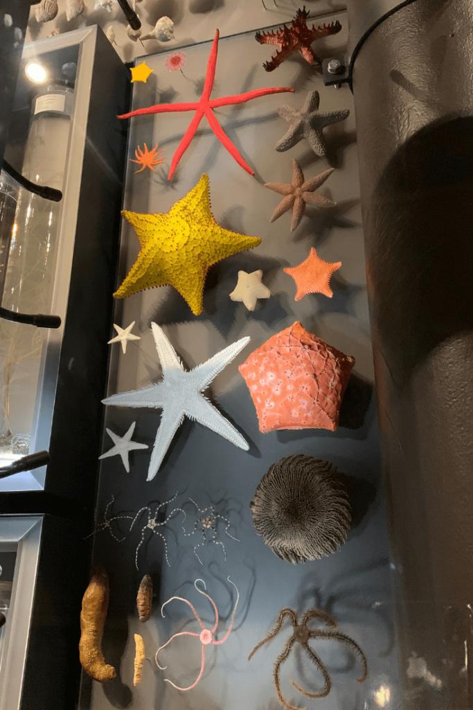 Starfish on the Biodiversity Wall