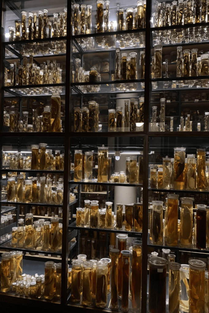 Wet Collection, Museum für Naturkunde, Berlin