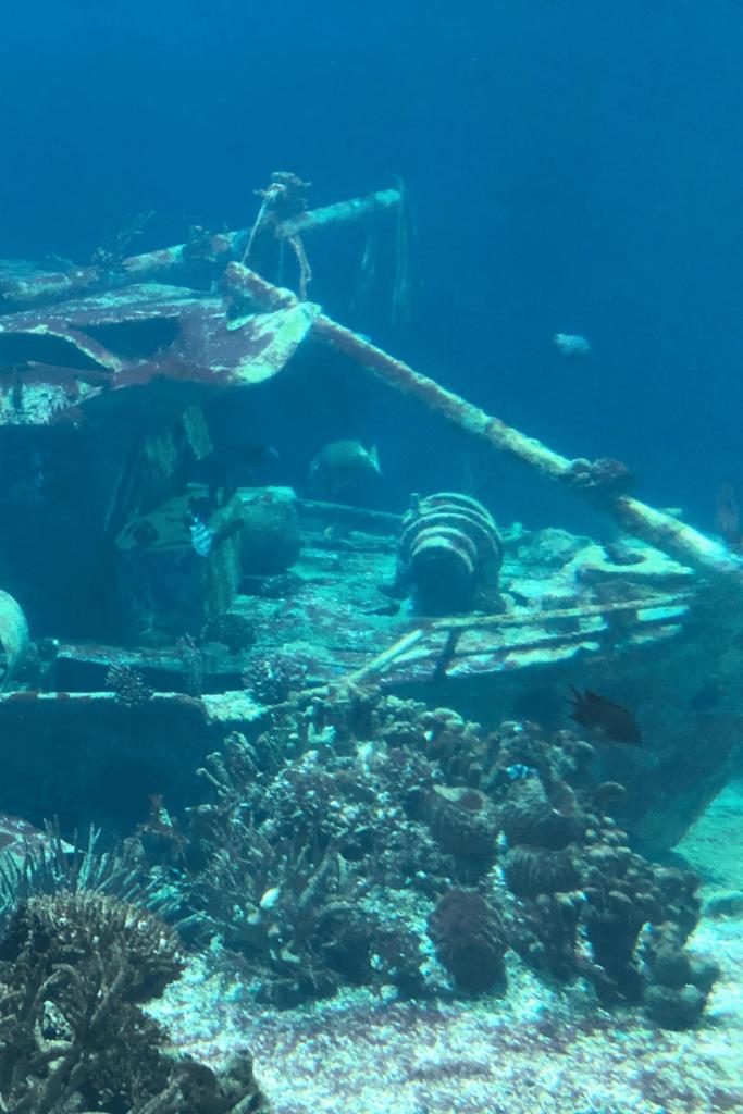 Shipwreck at Royal Burgers Zoo