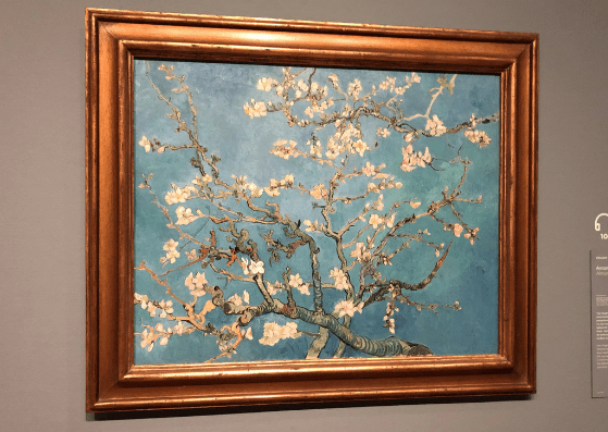 Almond blossoms at the Van Gogh Museum, Amsterdam