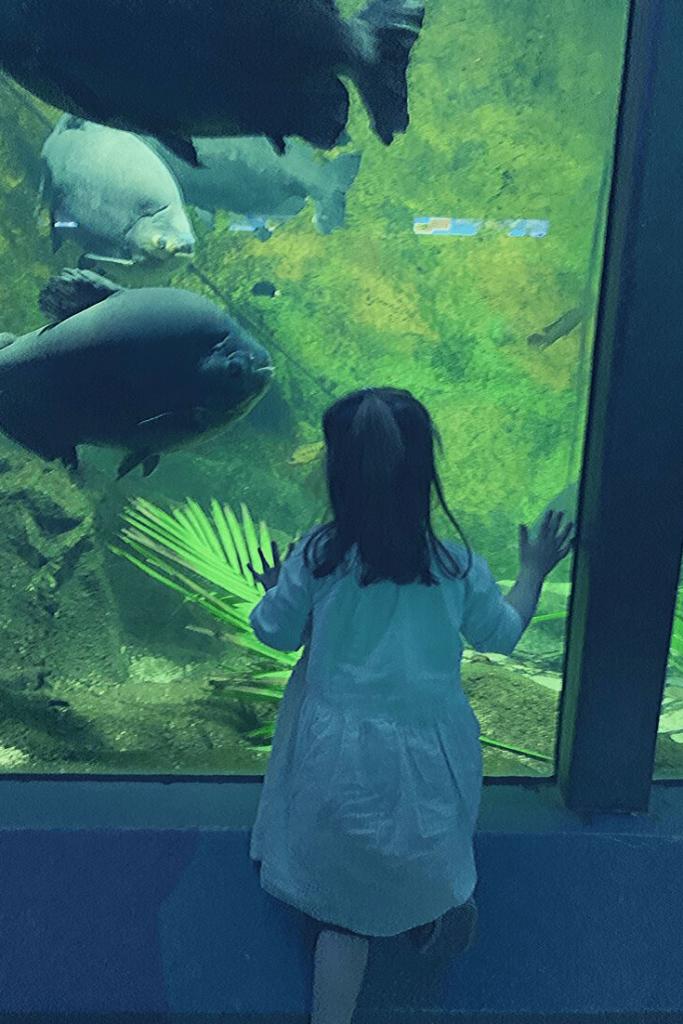 Piranha feeding in the Aquarium at Hellabrunn during a visit to the Munich zoo