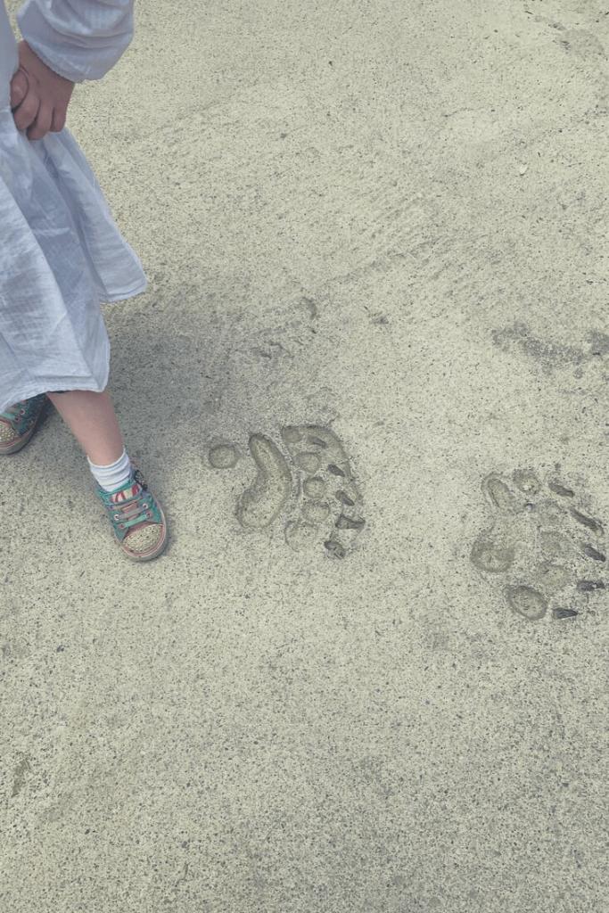 Following the polar bear footprints at Polar World in Hellabrunn Tierpark