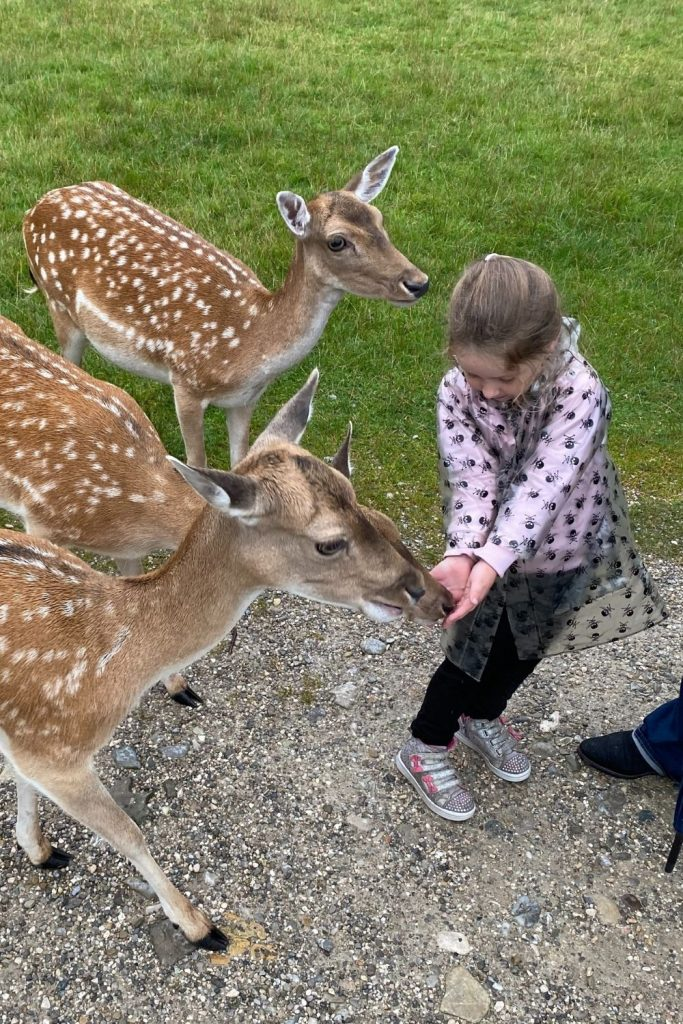 Feeding the deer at the Bergtierpark, south-east of Munich