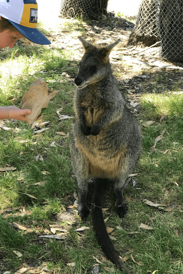 No Christmas in Australia would be complete without some time with some of Australia's cuddly wildlife; we plan to visit one of the wildlife parks and feed some locals
