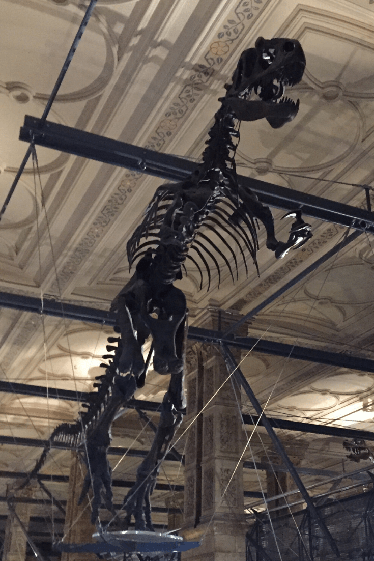 London's dinosaurs: Allosaurus fossil at the Natural History Museum in London