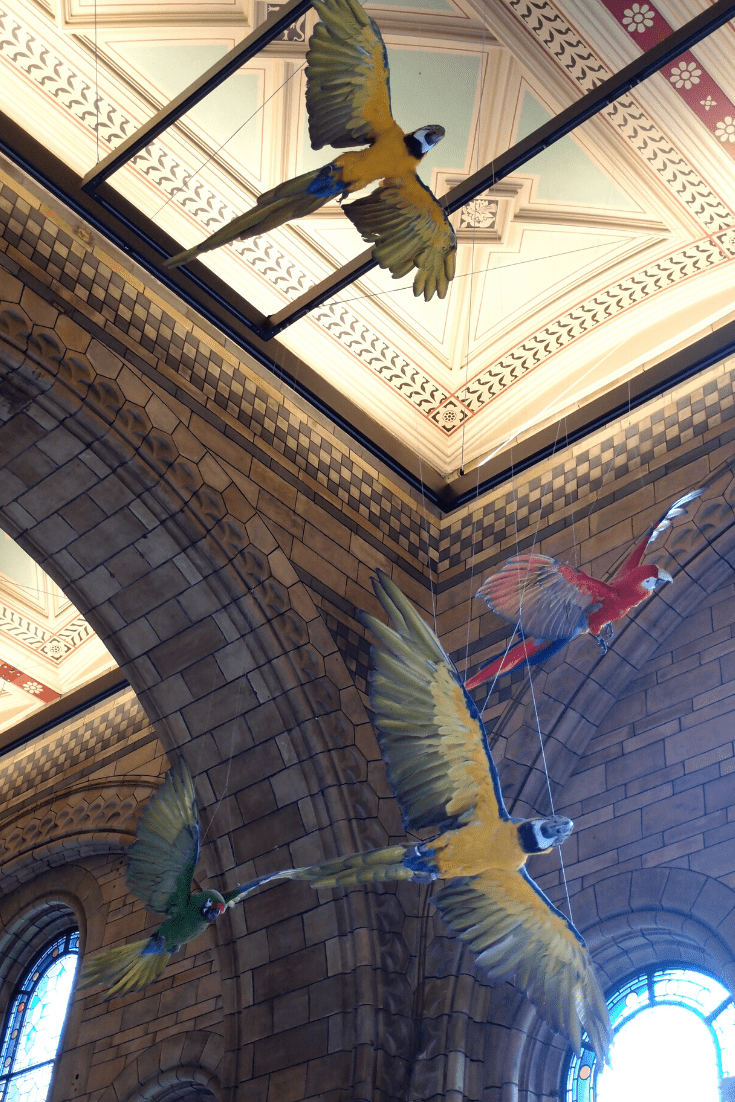 Birds in flight in Hintze Hall, Natural History Museum, London. The image also shows some of the gorgeous ornamentation in the Hall.