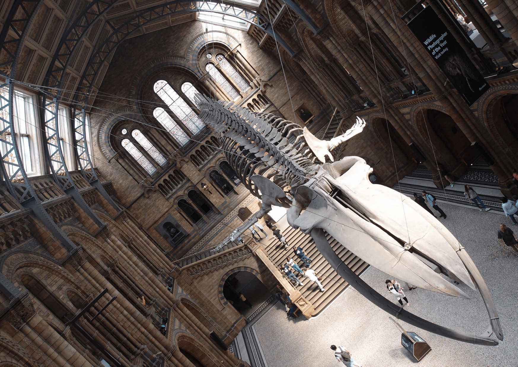 Hintze Hall, with its impressive whale skeleton; Natural History Museum, home of London's dinosaurs; what to do in London with a small child