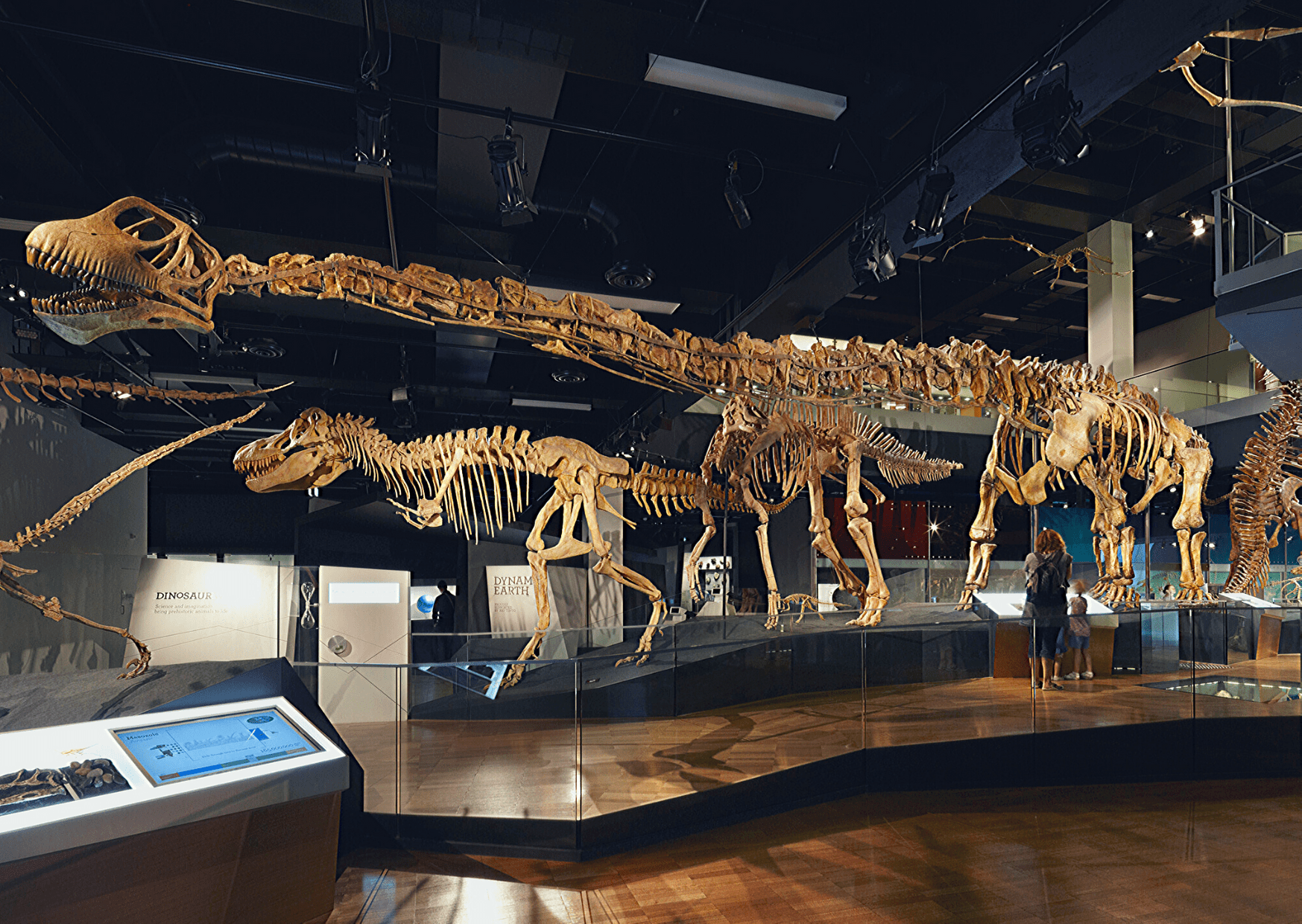 """Number 2 of 13 fun things to do in Melbourne: Visit the Museum Victoria and the """"Dinosaur Walk exhibition, featuring Tarbosaurus"""". Photo: Dianna Snape. Source: Museum Victoria"""