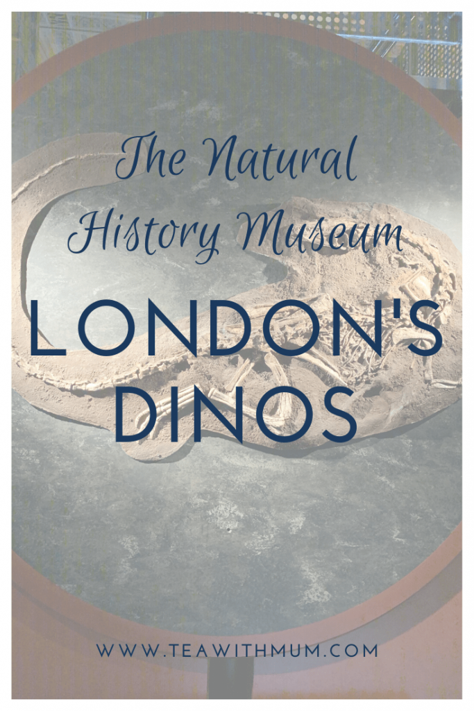 The Natural History Museum - home of London's dinosaurs; what to do in London with a small child; what to do in London when it rains; RAWR!