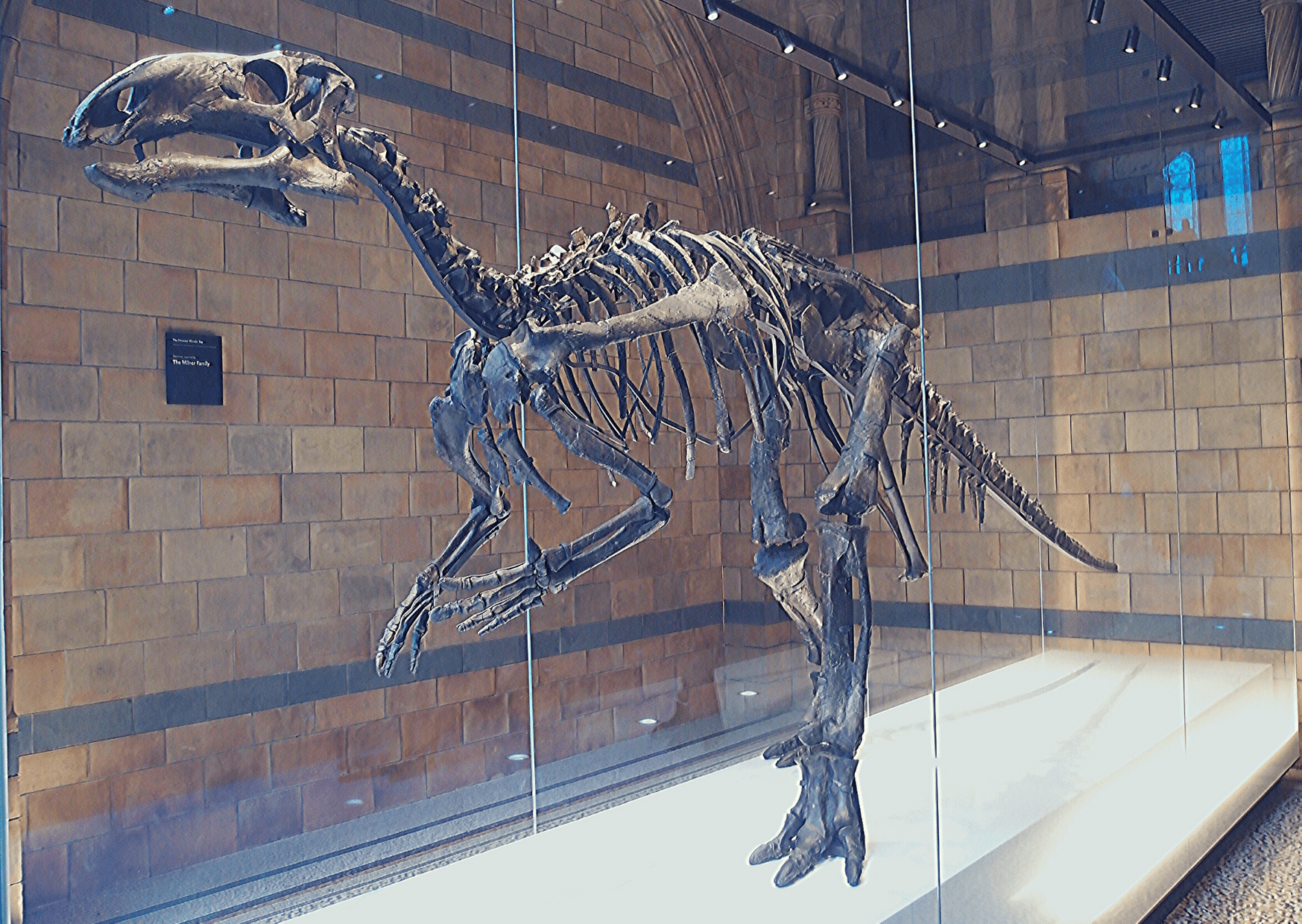 London's dinosaurs, including the Mantellisaurus, on the dinosaur fossils found in the UK