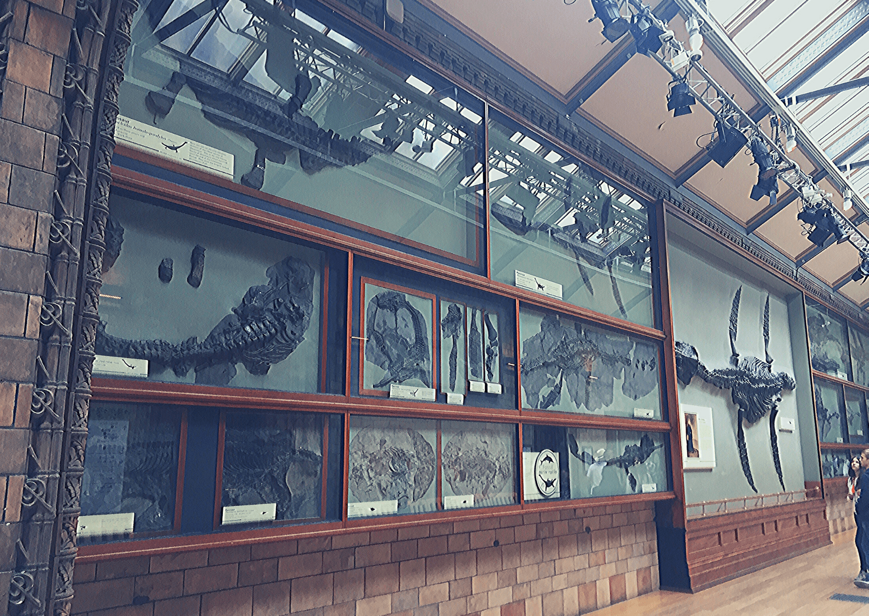 Some of Mary Anning's discoveries: the plesiosaur and other prehistoric aquatic reptiles on display at the Natural History Museum