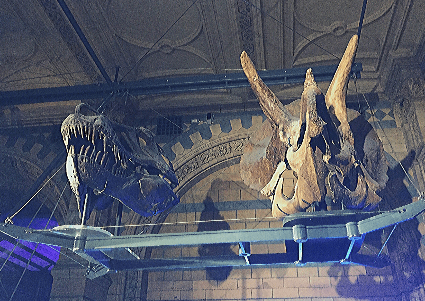Two the biggest dinosaur skulls: Tyrannosaurus and Triceratops, part of the London's dinosaurs exhibit at the Natural History Museum; What to do in London with a small child