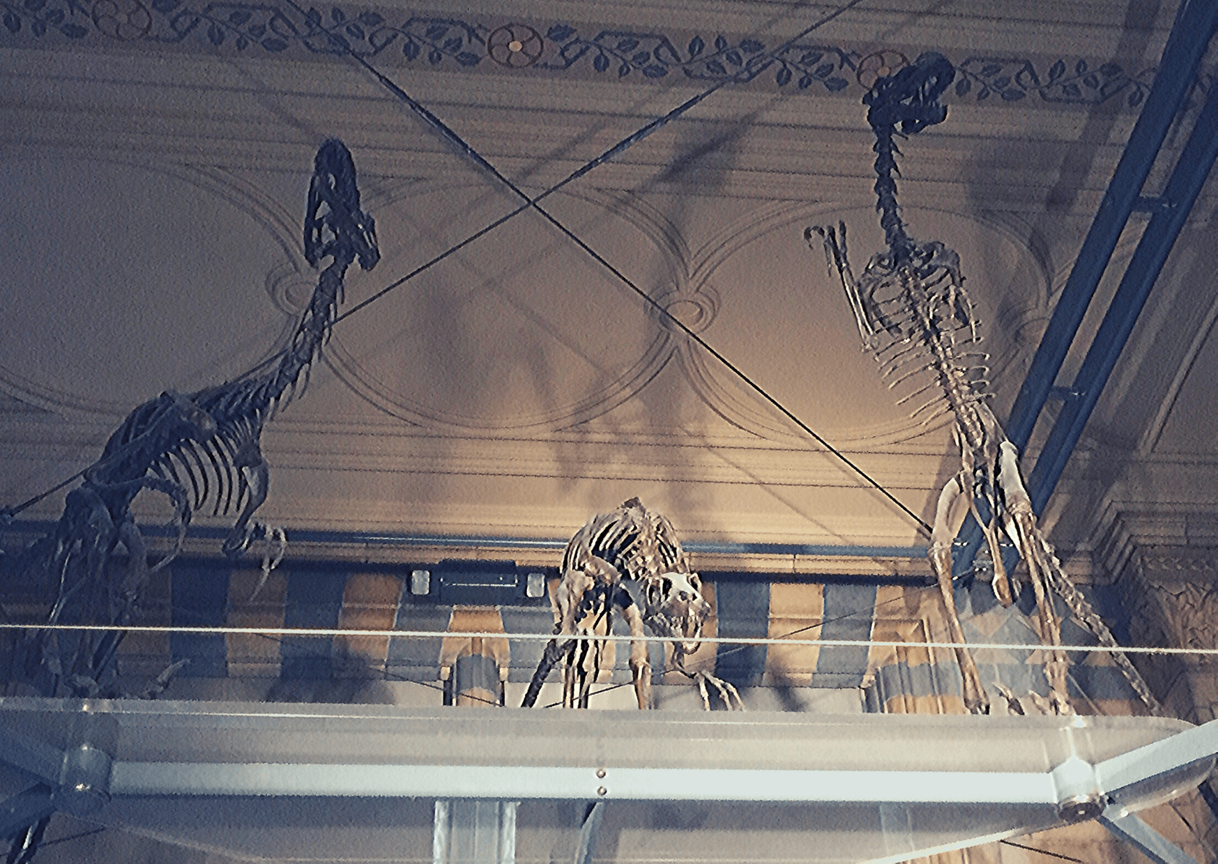 Trio of dinosaur fossils, possibly velociraptor, at the Natural History Museum - the home of London's dinosaurs. What to do in London with a small child.