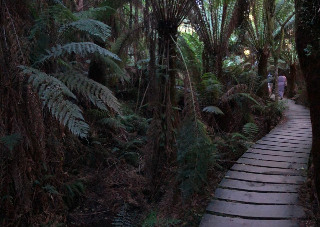 Mait's Rest rainforest walk: A must-see on the Great Ocean Road with kids, large or small: make it part of your Great Ocean Road itinerary