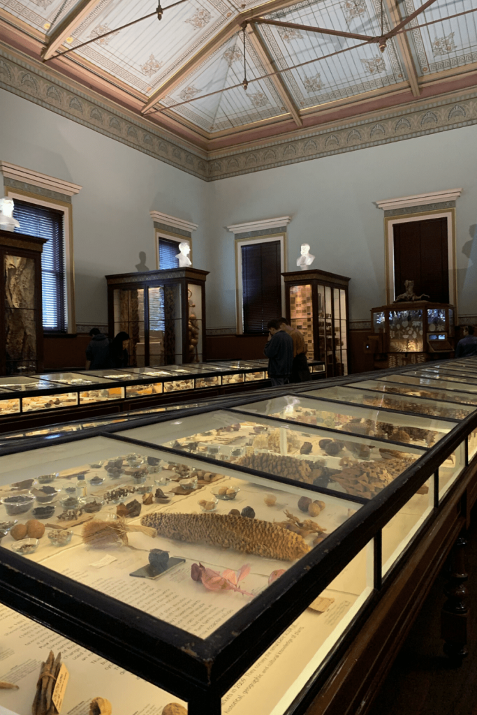 Adelaide with kids: The Museum of Economic Botany (inside)