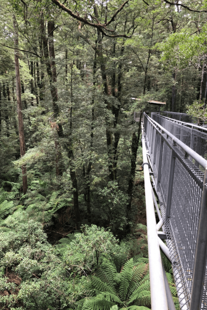 The treetop walk in the Otway - not for the feint of heart! Great activities to do on the Great Ocean Road with kids