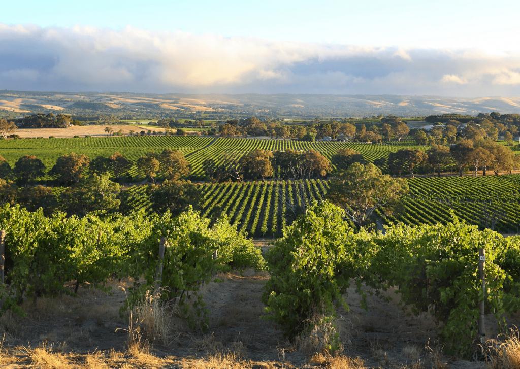 View of wineries in the McLaren Vale, Fleurieu Peninsula. Image: Canva