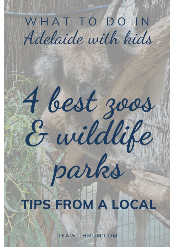 4 best zoos and wildlife parks in and near Adelaide; tips from a local; what to do in Adelaide with kids; with image of koala from Cleland Wildlife Park