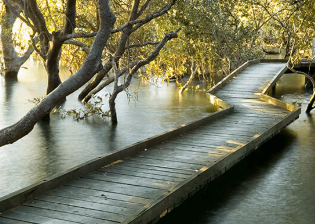 St Kilda mangroves boardwalk walk - not technically a beach but still worth a mention