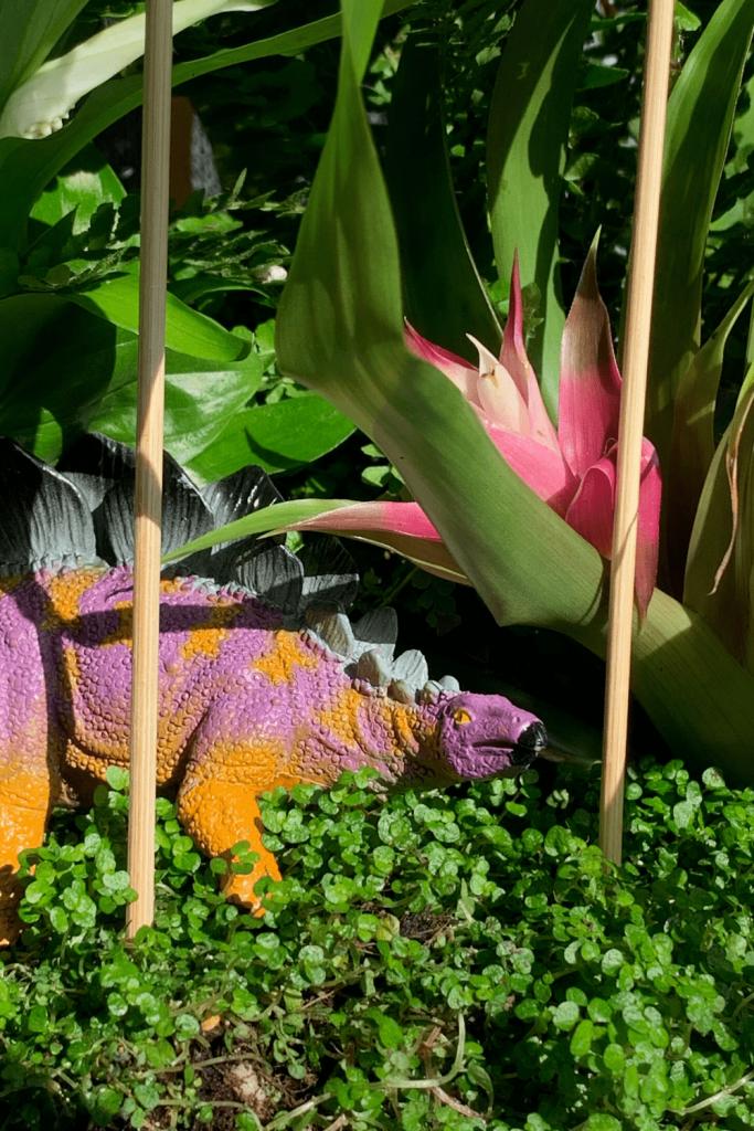 Close up of our stegosaurus hiding in our dinosaur jungle terrarium
