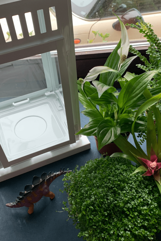 What you need to make your own dinosaur jungle terrarium; lantern, plants, dino...