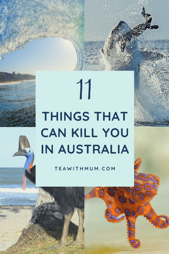 11 things that can kill you in Australia: title with waves, sharks, cassowaries and blue-ringed octopus