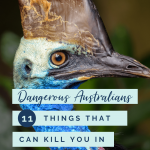 Dangerous Australians: 11 things that can kill you in Australia. Title with cassowary