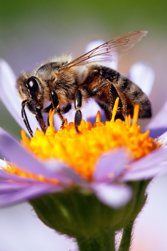 Dangerous Australians: honey bees, wasps and other insects and arachnids