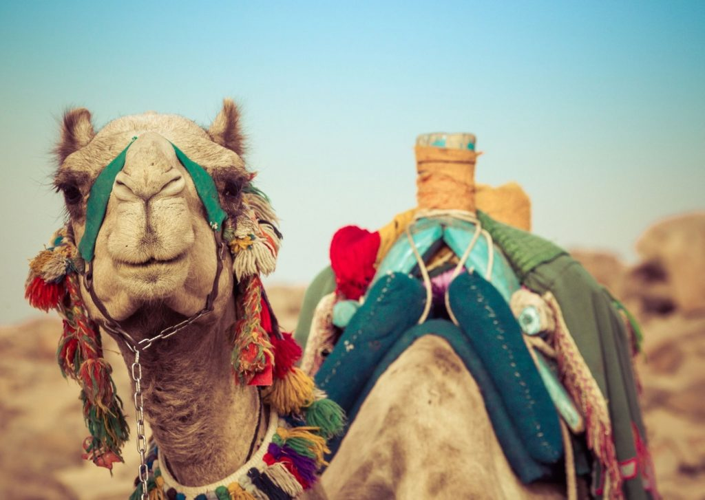 13 fun things to do in Dubai with kids: visit the desert and get a taste of Bedouin culture
