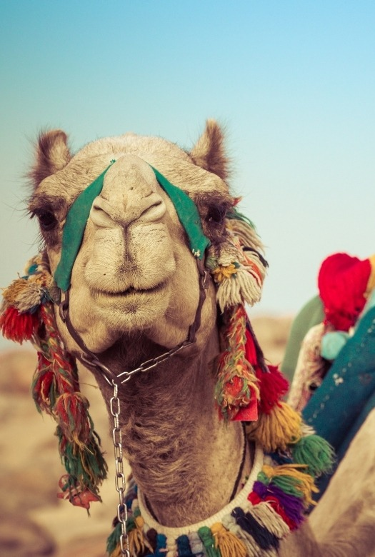 The ultimate guide to Dubai with kids: 13 amazing things to do - ride a camel