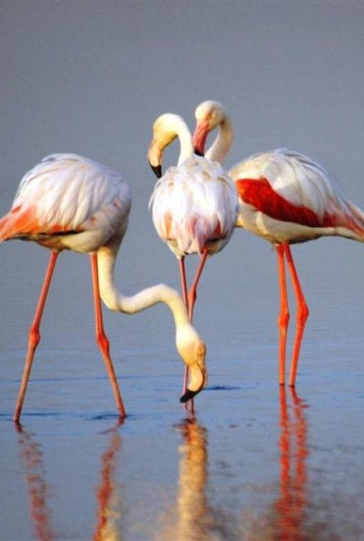 Free things to do in Dubai with kids: marvel at the flamingos at Was al Khor Wildlife Sanctuary.