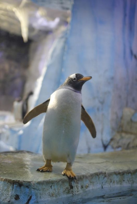 Free things to do in Dubai with kids: see the march of the penguins at Ski Dubai