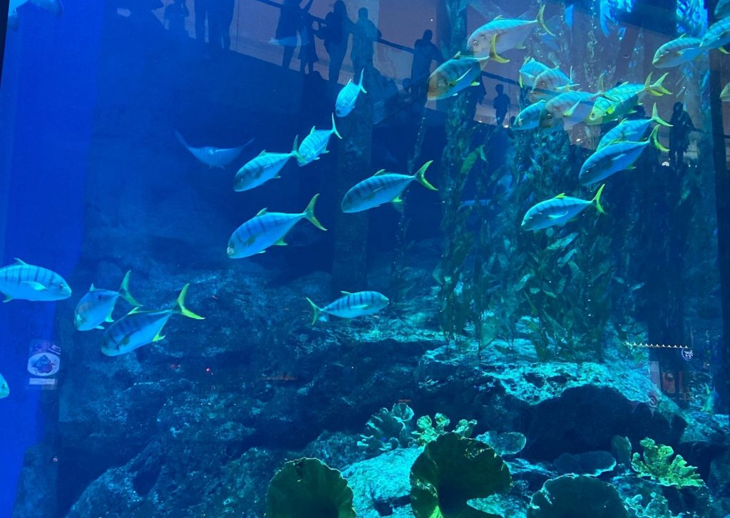 The ultimate guide of things to do in Dubai with kids: visit the aquarium! And go snorkeling or swimming with the fish if you dare!
