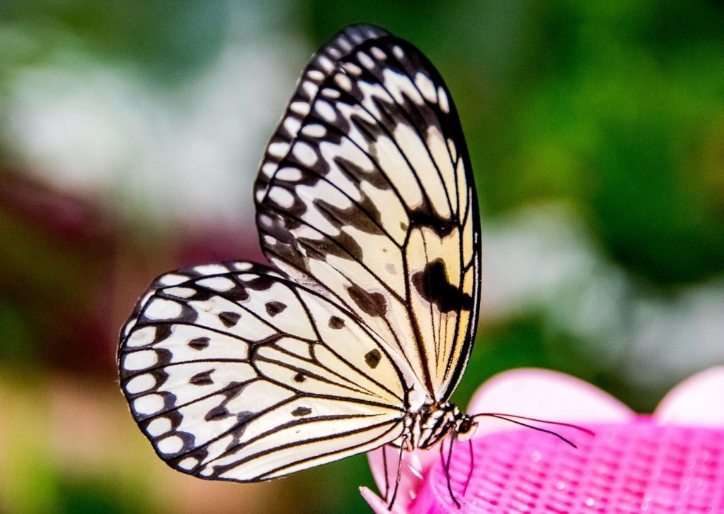 Things to do in Dubai with kids - see the butterflies at the Dubai Miracle Garden