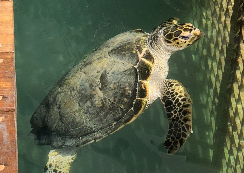 The ultimate list of things to do in Dubai with kids of all ages: feed the turtles at the Dubai Turtle Rehabilitation Project
