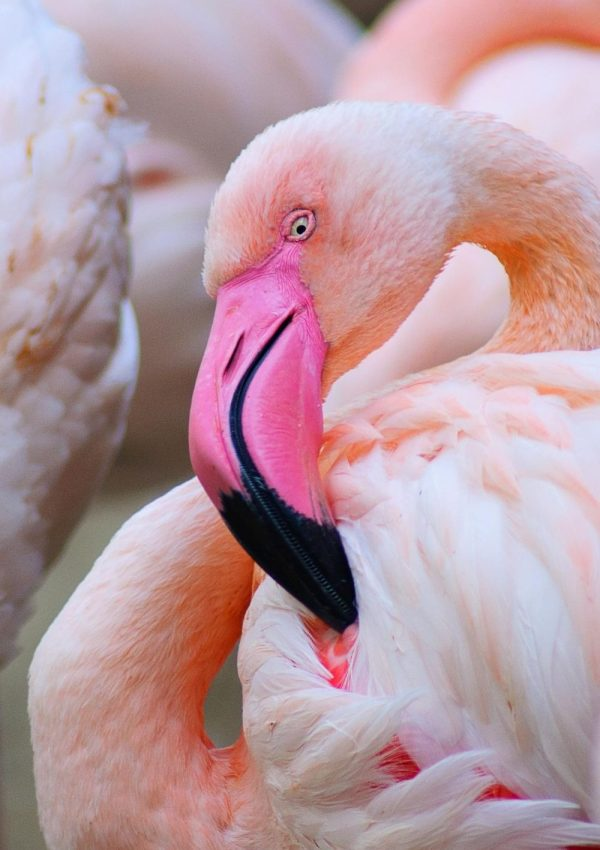10 amazing things to do for FREE in Dubai with kids: visit the flamingos at the wildlife sanctuary