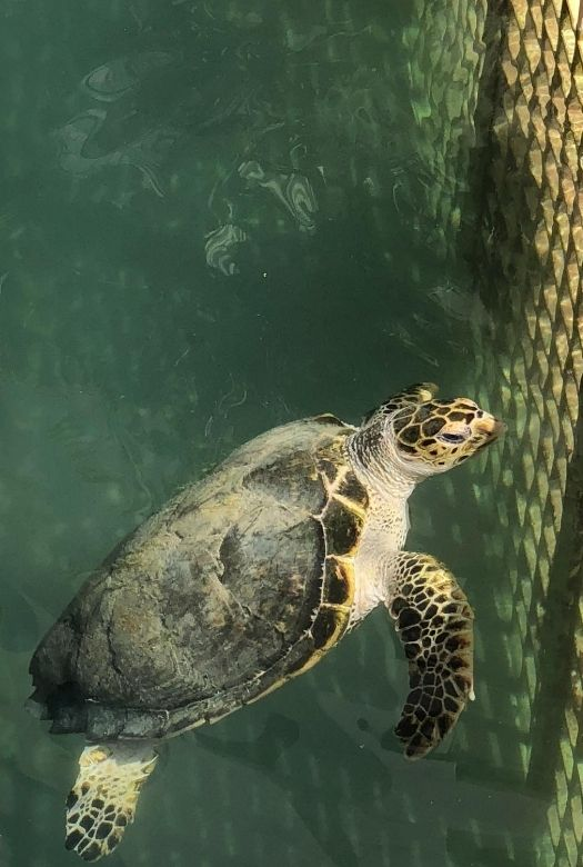 10 things to do in Dubai with kids for free: feed the rescue turtles