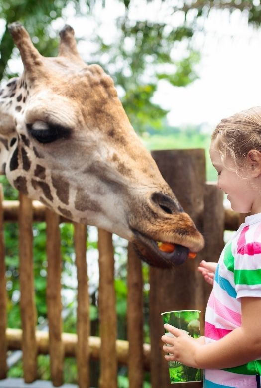 Ultimate 2020 gift guide for travel lovers, big and small. Why not gift your little travel lover a keeper day at the local zoo, where they can feed the giraffes. (image of young girl feeding a giraffe)