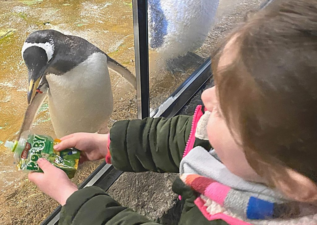 Miss M and Gentoo penguin who is interested in her squeeze